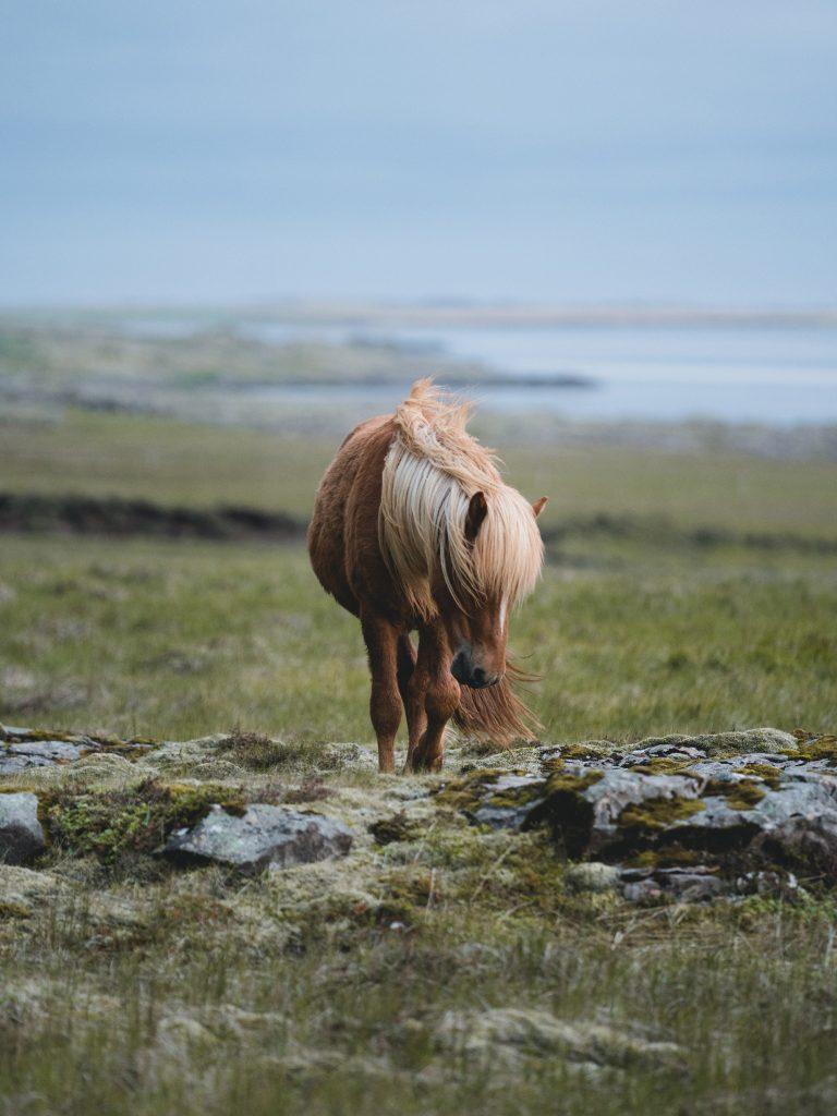 Häst betar i ett fint landskap