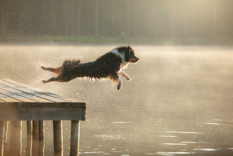 8 tips när du ska simma med hunden