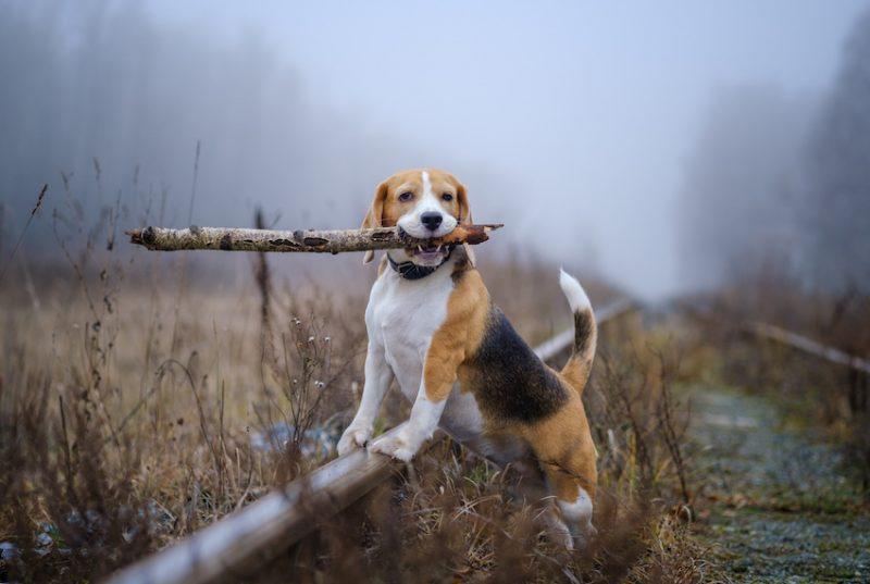 När behöver hunden tillskott av zink?